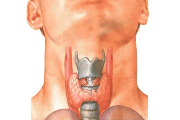 Thyroid Nodules Explained Penang Surgeon